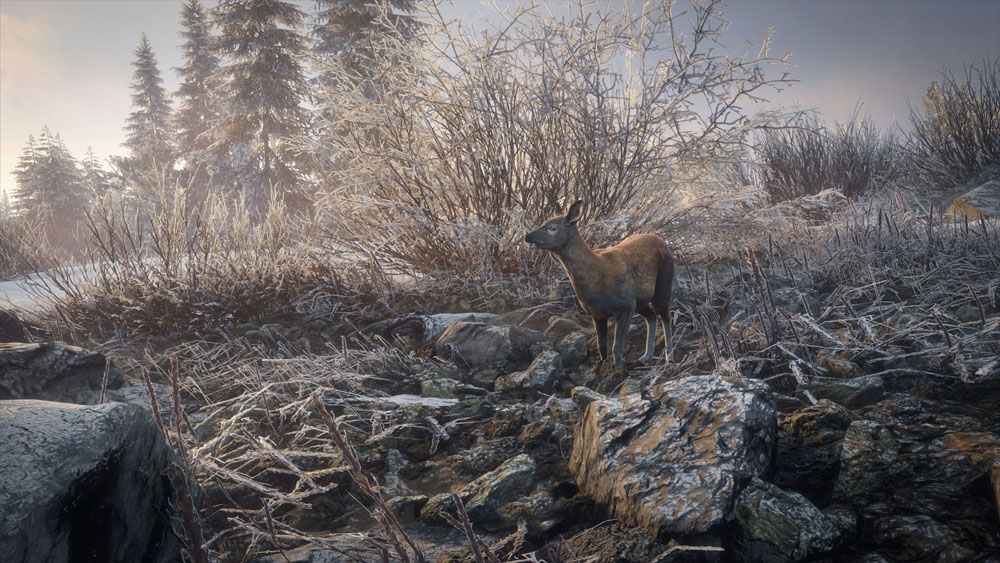 theHunter: Call of the Wild - Medved-Taiga - скриншот из игры